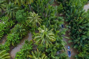 Coconuts and Cultural Tourism: Exploring Ben Tre with VTV4