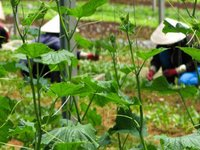 What Does it Take to Grow Organic Food in Vietnam?